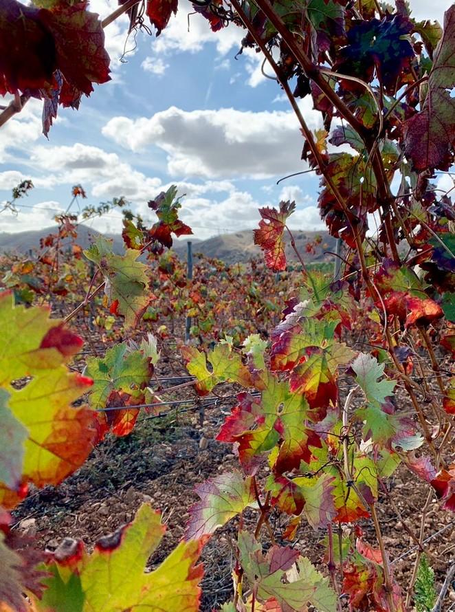 wijngaard-algarve