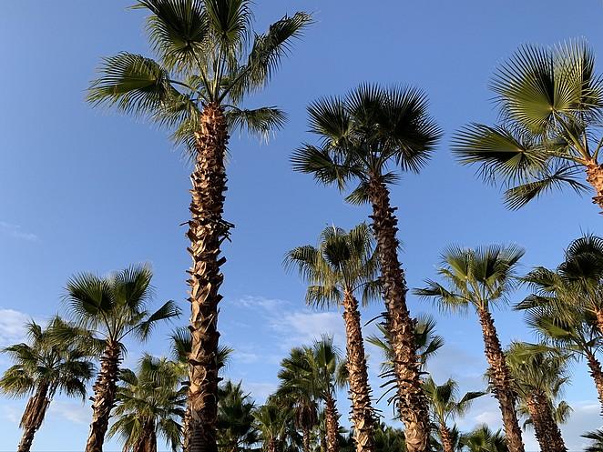 palmbomen-algarve