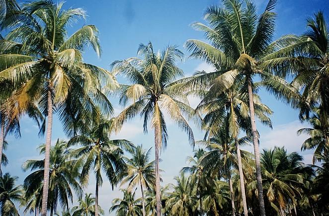 palmeneiland-thailand