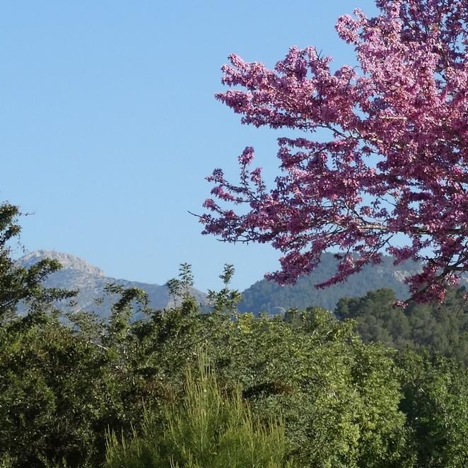 Mallorca in april: zo heerlijk is Mallorca in de lente