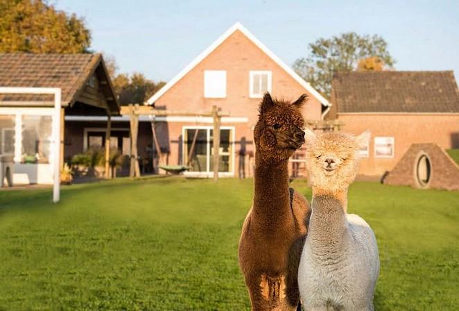 alpaca-boerderij-overnachten