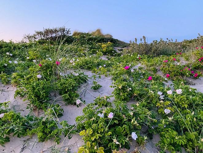 bloemen-duinen-lente