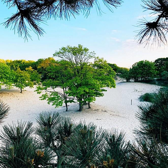 De mooiste plekken in het Westduinpark in Den Haag