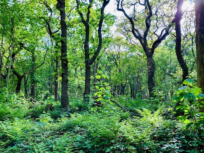 huisje-in-het-bos