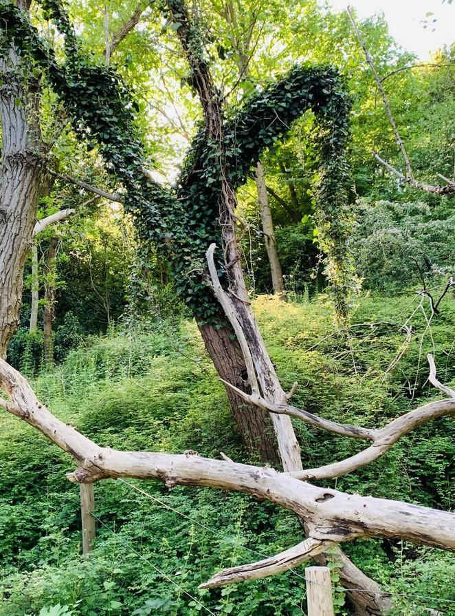 westduinpark-natuur