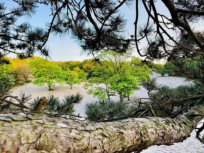westduinpark-zandvlakte-met-boom