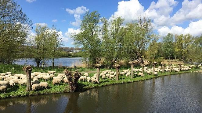 best-western-hotel-bij-rotterdam