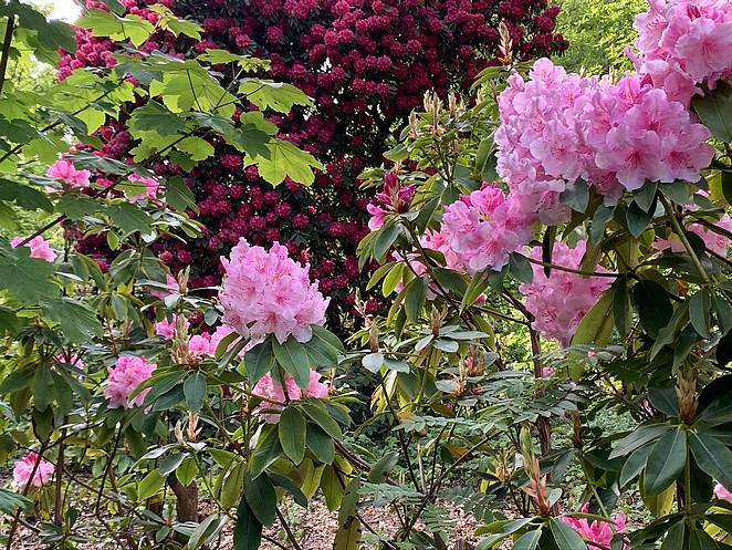 bloemen-ockenburgh