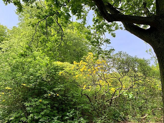 boom-met-gele-bloemen