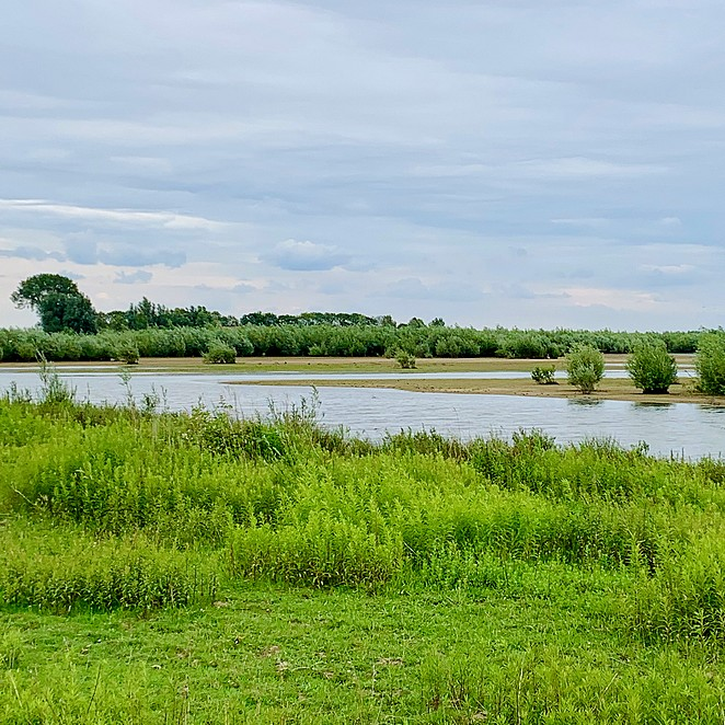 Natuureiland Tiengemeten: ongerepte natuur op onbekend eiland in Zuid-Holland