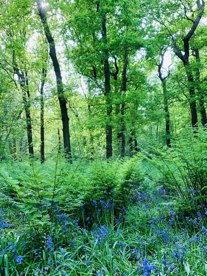 hyacintenbos-den-haag