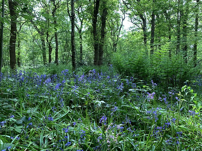 hyacintenbos-meivakantie