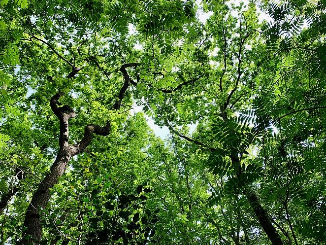 jungle-den-haag