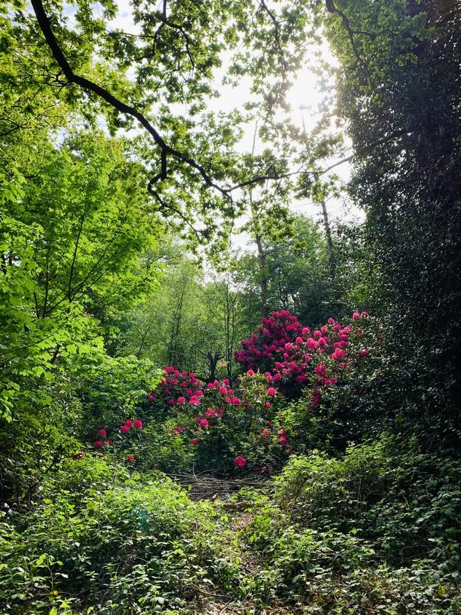 landgoed-ockenburgh-bloemen