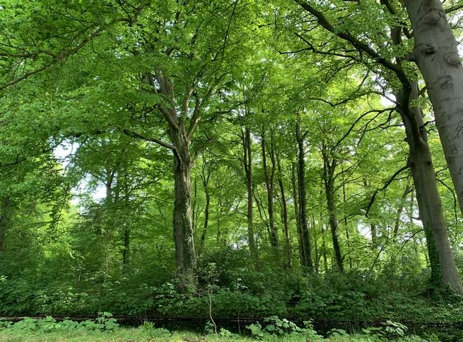 landgoed-ockenburgh-bos