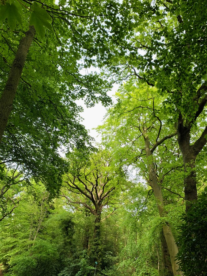 bomen-landgoed-ockenburgh