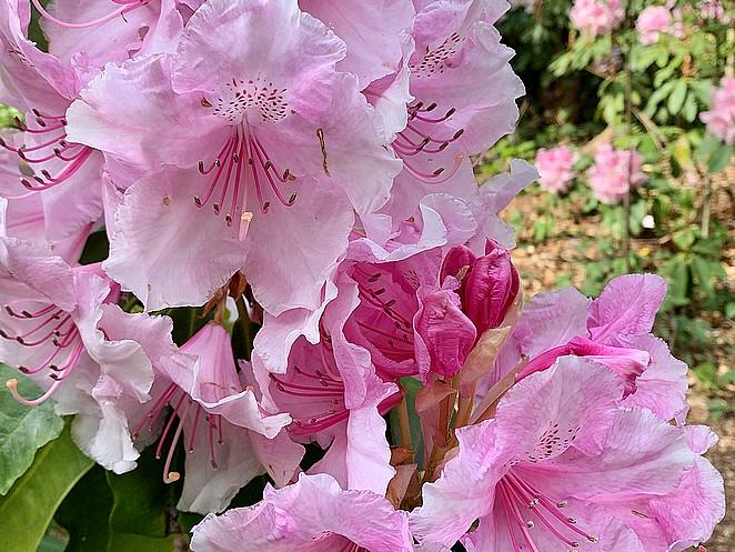 roze-bloemen-landgoed-ockenburgh
