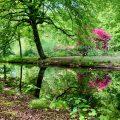 wandeling-landgoed-ockenburgh