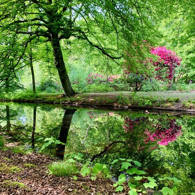Wandelen op Landgoed Ockenburgh: bos en bloemenpracht bij Buitenplaats Ockenburgh in beeld