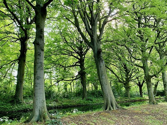 wandeling-op-landgoed-ockenburgh