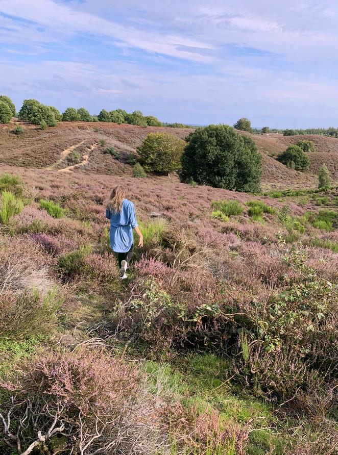 wandelen-heide-posbank-september