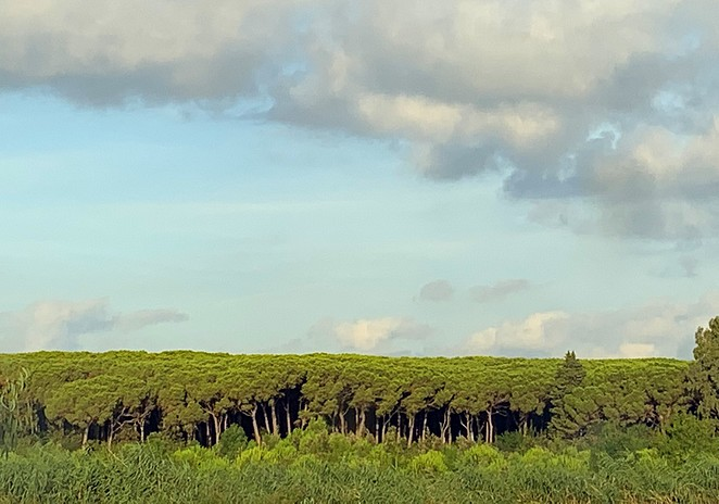 riserva-naturale-tomboli-di-cecina