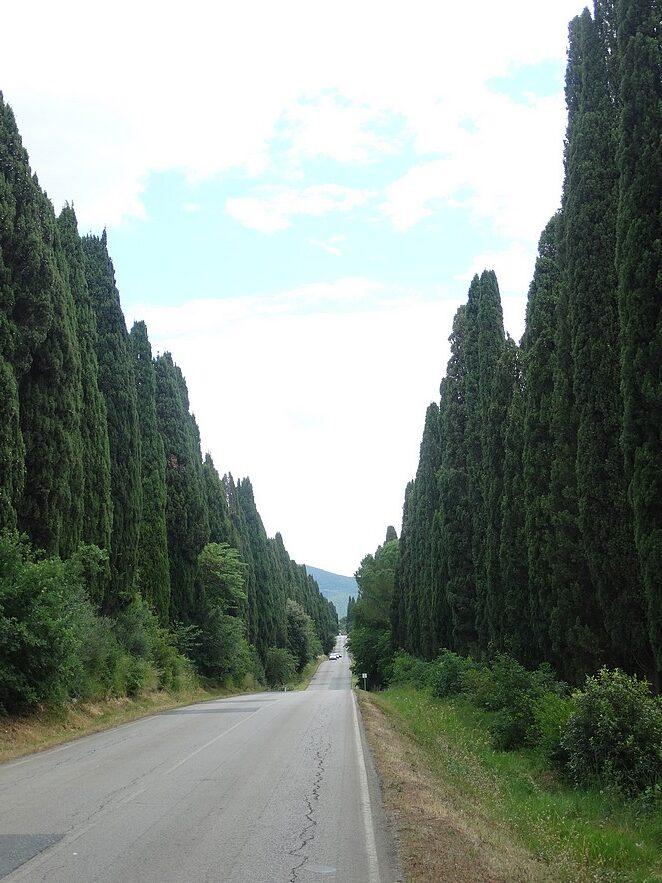 viale-dei-cipressi