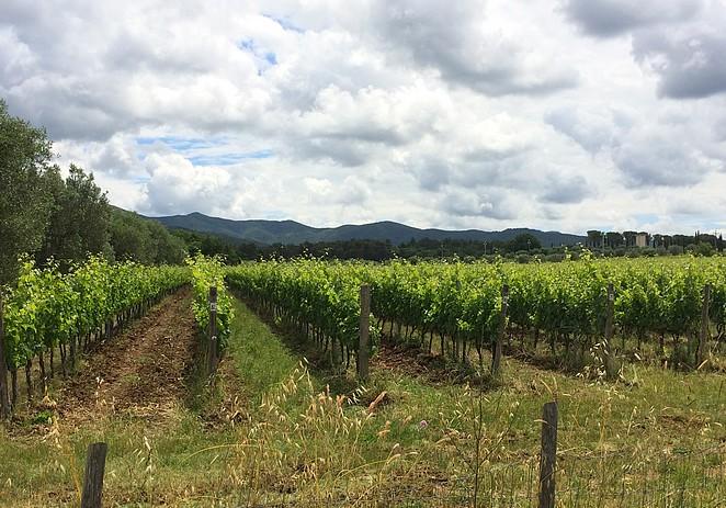 wijngaarden-bolgheri