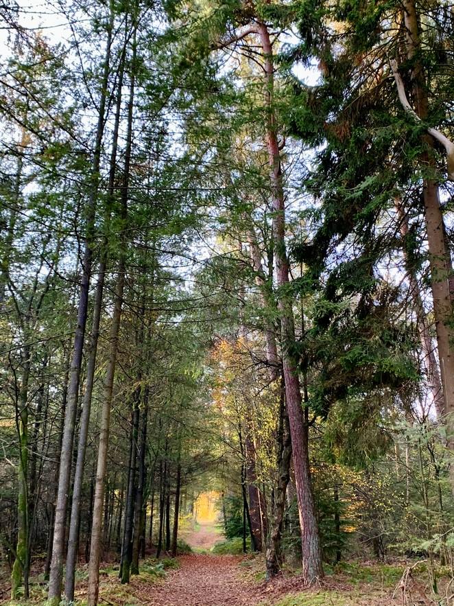 boswandeling-maarn