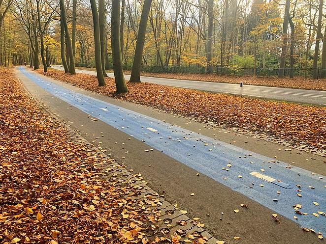 fietsroute-kaapse-bossen