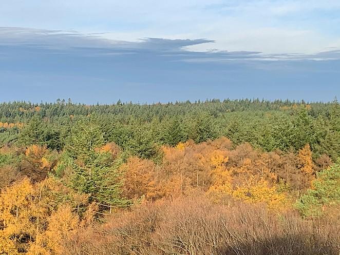 herfstbos-van-bovenaf