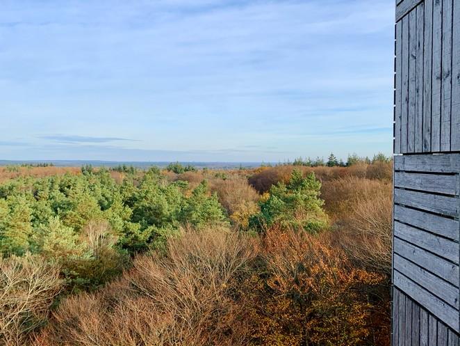 uitkijktoren-kaapse-bossen