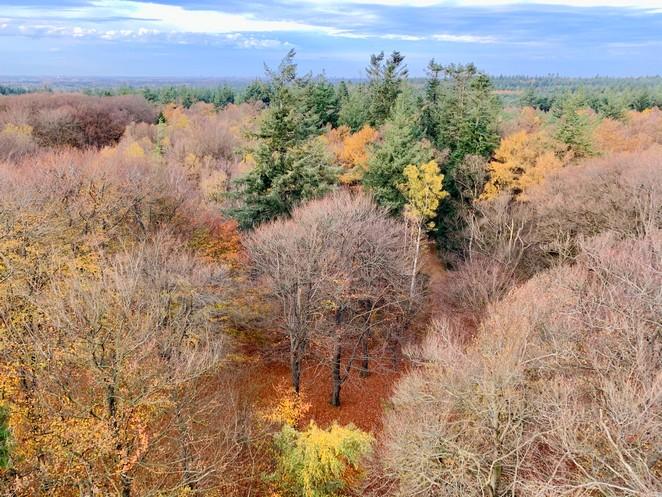 uitzichtpunt-kaapse-bossen