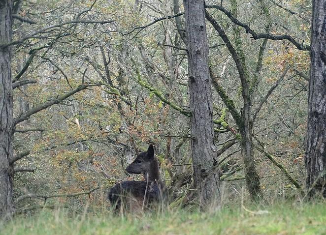 donker-hert