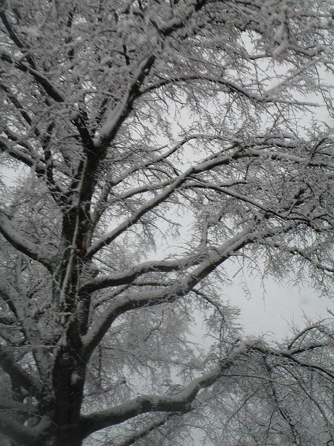 boom-sneeuw-nederland