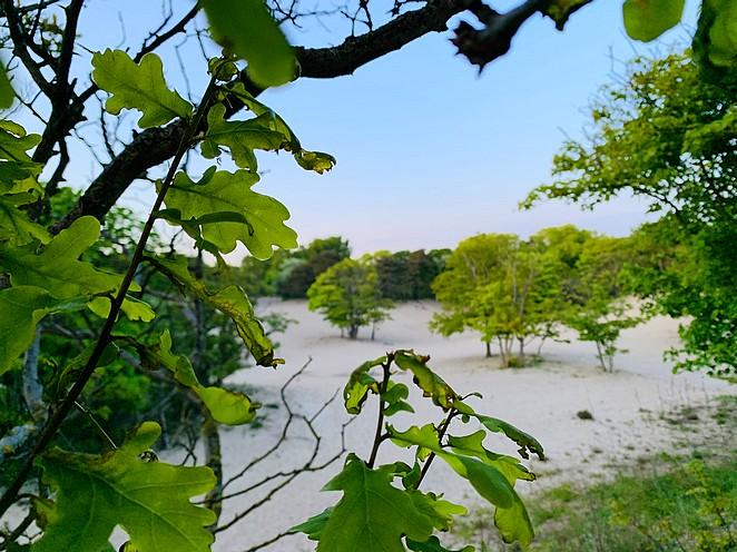 natuur-duinen-den-haag