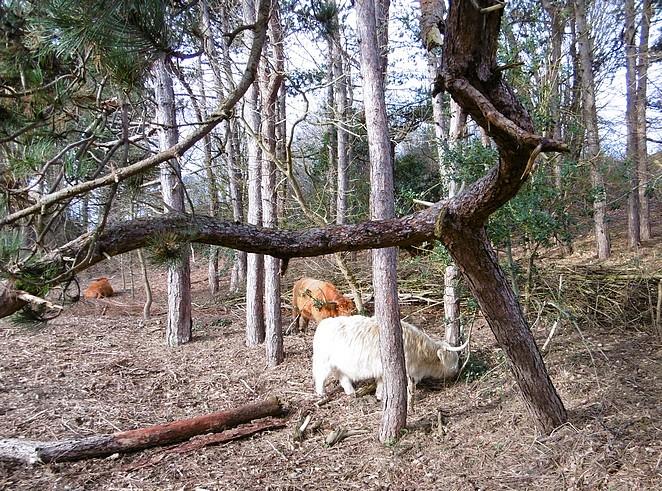 hooglander-bos-westduinpark-wandelen