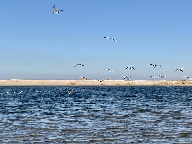 hollandse-duinen-nationaal-park