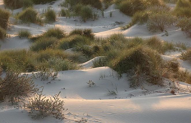 hollandse-duinen