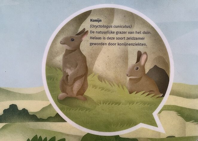 konijntjes-nationaal-park