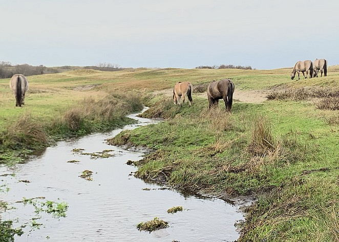 lentevreugd-nationaal-park-hollandse-duinen