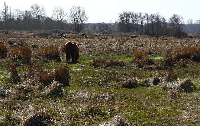safari-nederland