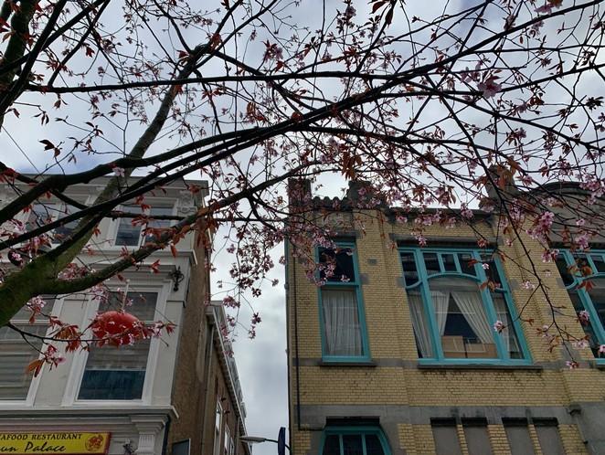 bloesem-chinatown