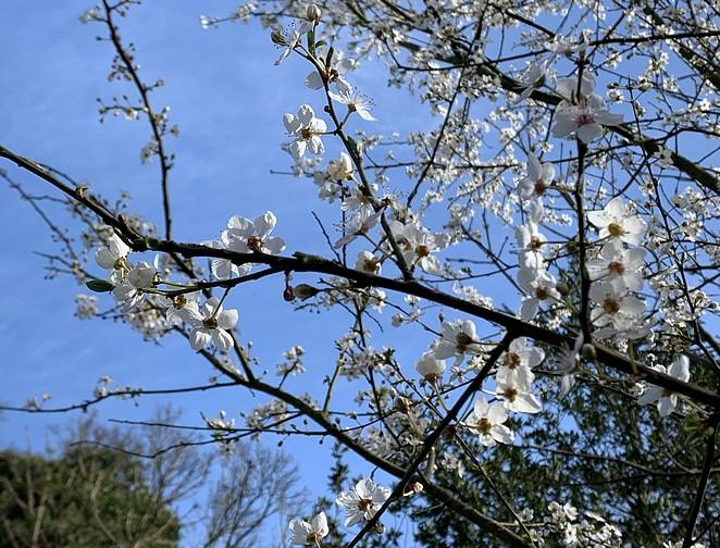 bloesem-maart-westduinpark