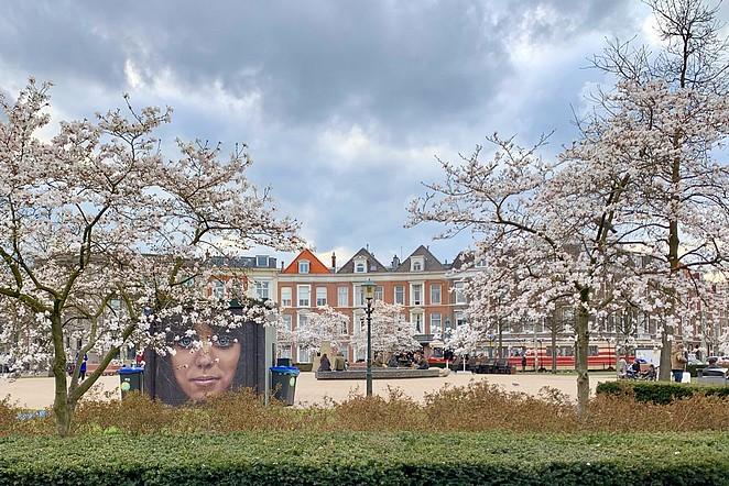 bloesem-den-haag-prins-hendrikplein