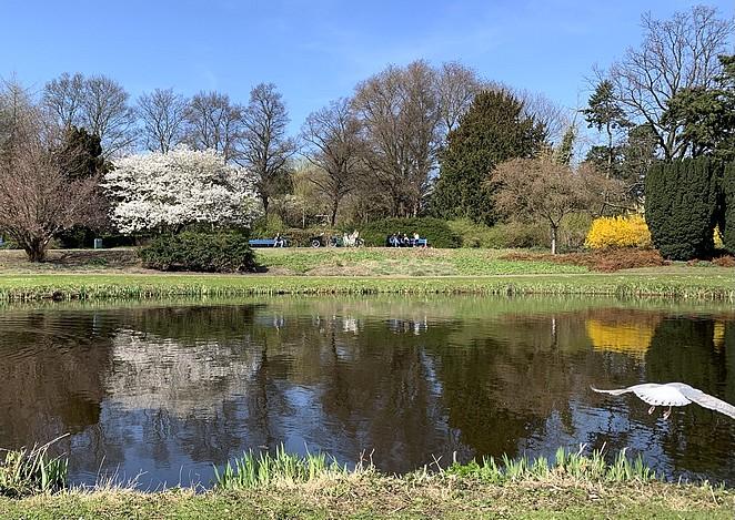 bloesem-zuiderpark-villierskopje