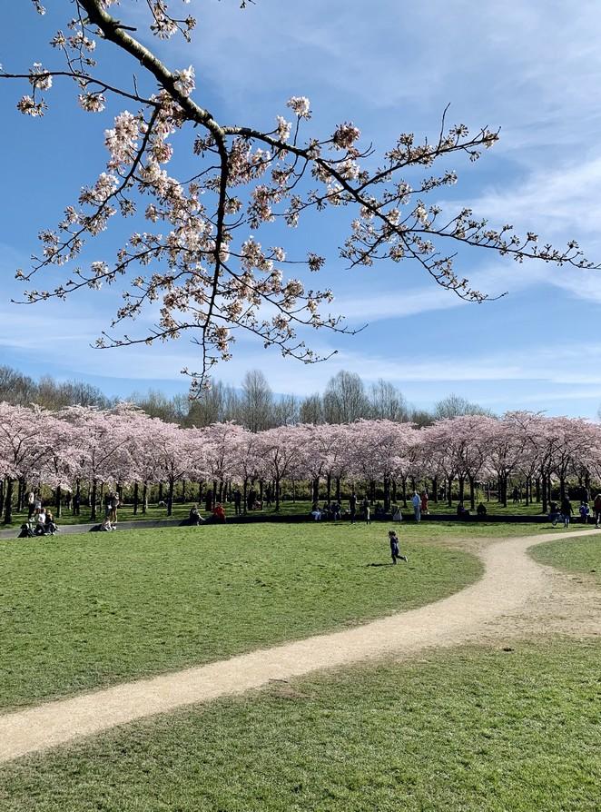 bloesempark-amsterdam