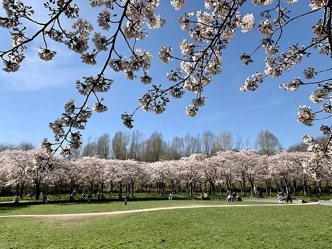 bloesempark-amsterdamse-bos