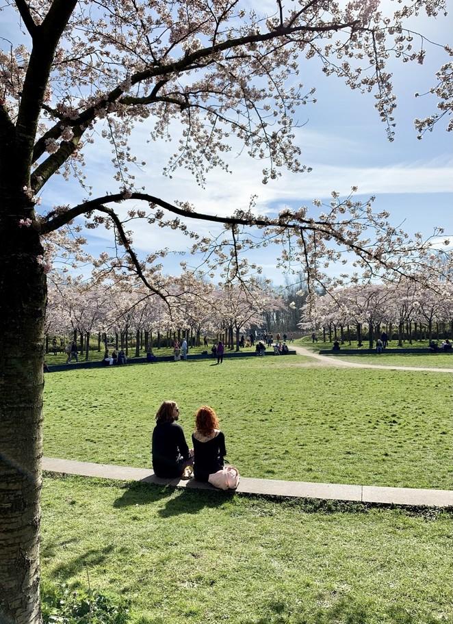 bloesempark-in-bloei