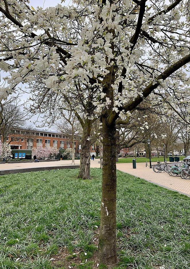 bloesempark-den-haag